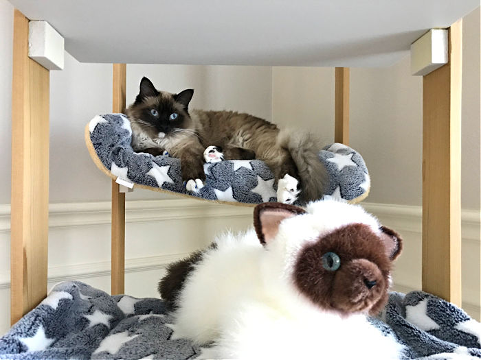 Photo of a Siamese Cat in the DIY Cat Tree. Here's a quick and easy woodworking project for cat lovers. I love how this DIY Cat Tree Wood House - Cat Tower turned out.