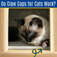 Do Claw Caps for Cats Work? I LOVE them! They are easy to use, don't take much time to apply, and they are absolutely stopping our cat from shredding our furniture.